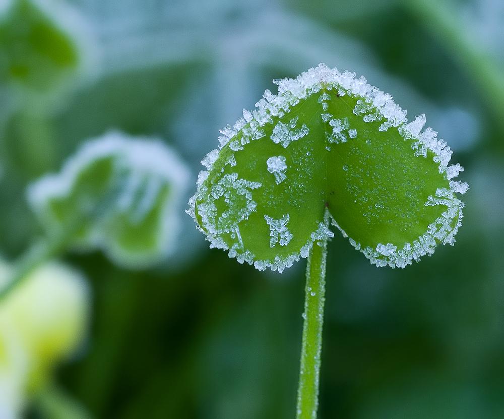 """""""Das gefrorene Herz""""..."""