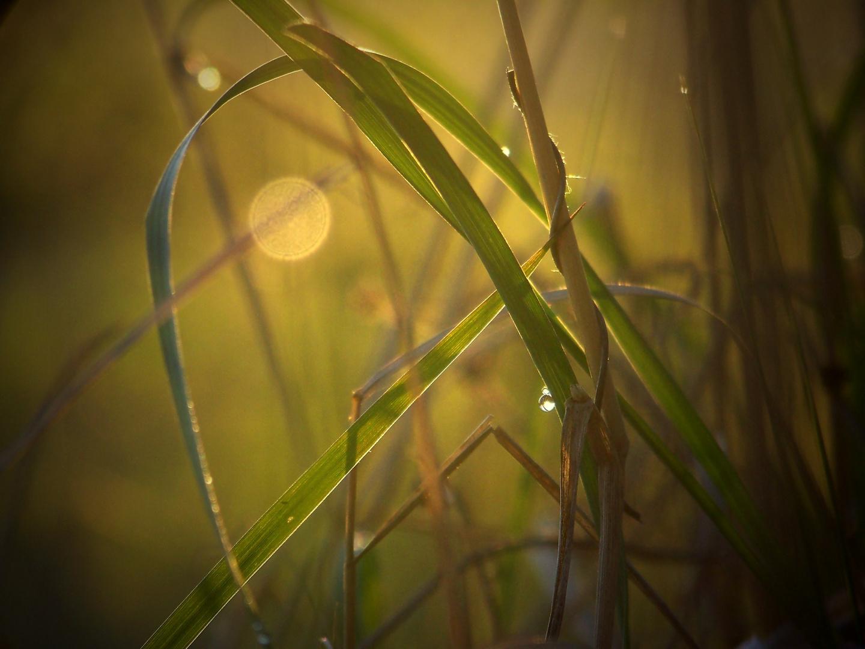 Das geheime Leben der Gräser