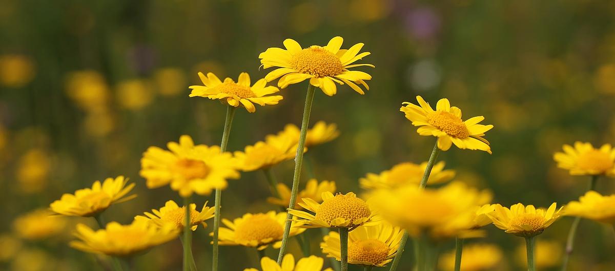 Das Gelb