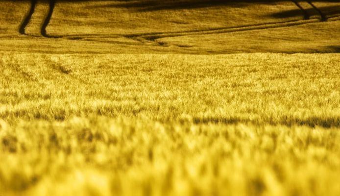 Das gelbe Feld