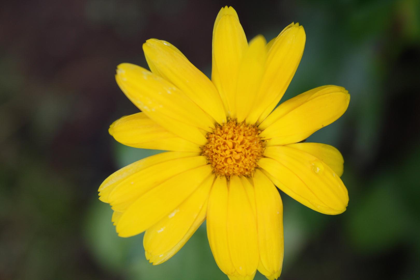Das gelbe Stralen