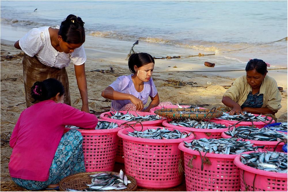 Das gerechte Aufteilen des Fischfangs