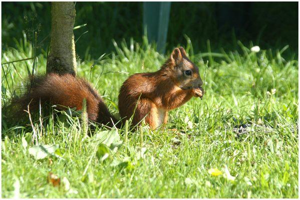 Das geyrische Eichhörnchen Part II... ^^