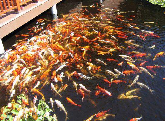 ...das gibt viele Fischstäbchen ..... ;-)