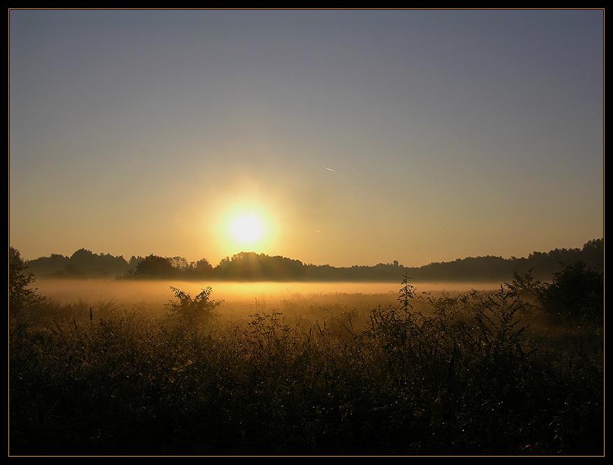 Das Glitzern des Morgentaus