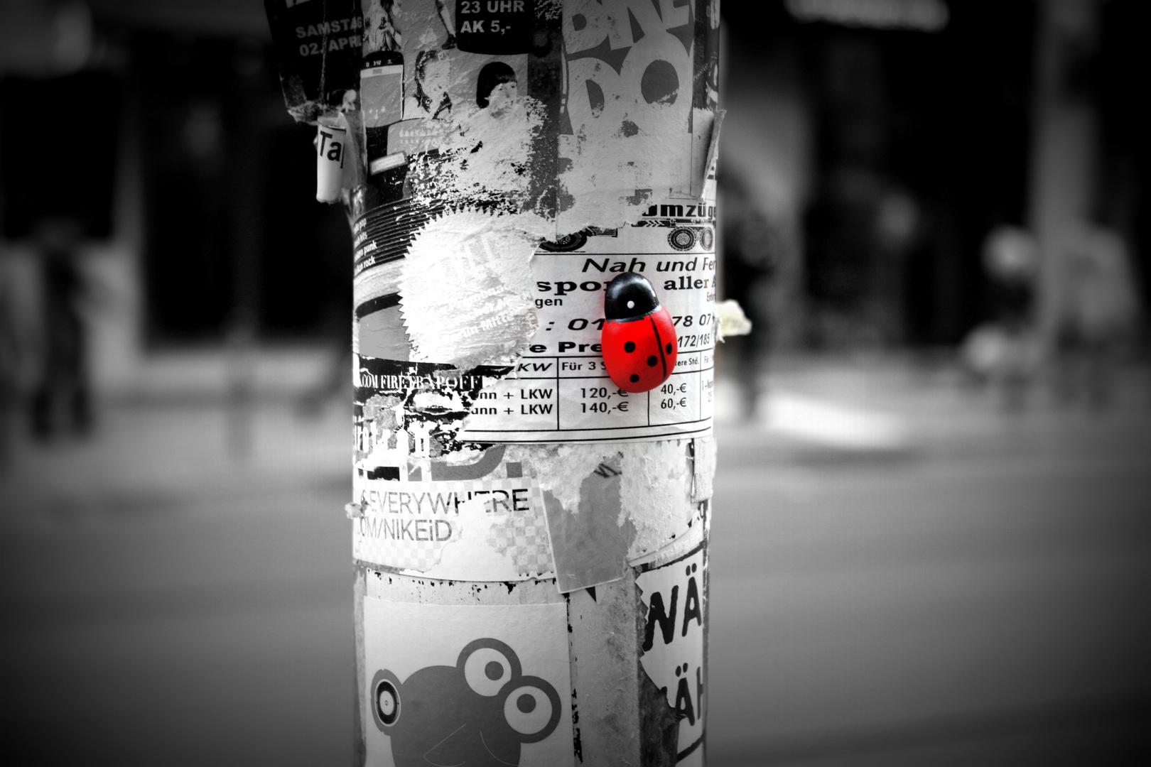 Das Glück an der Strassenlaterne