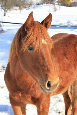 Das Glück der Erde, liegt auf dem Rücken der Pferde :-)
