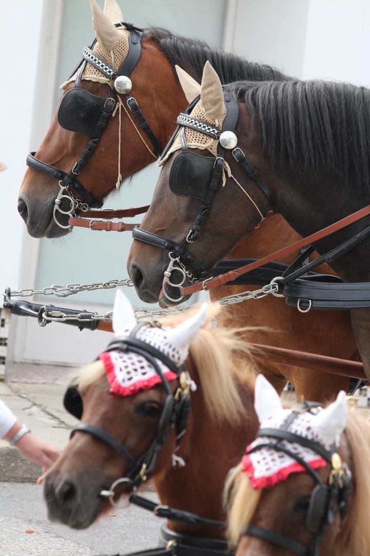 Das Glück der Erde - liegt auf dem Rücken der Pferde