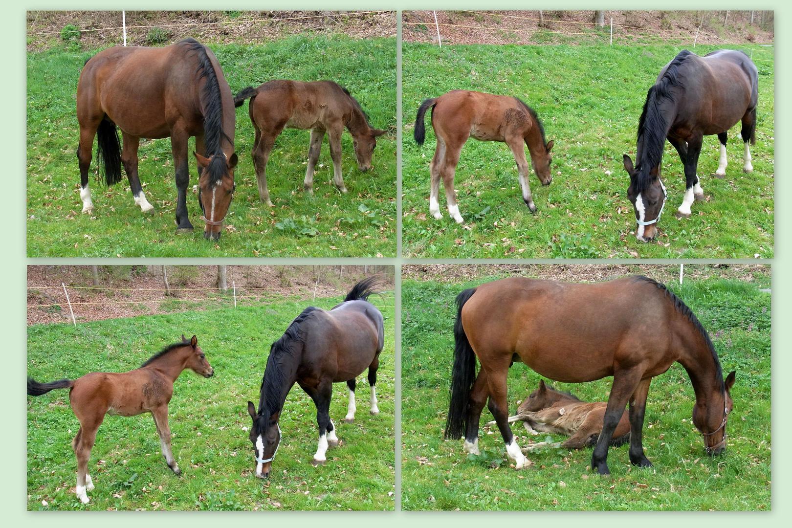 Das Glück der Pferde ....