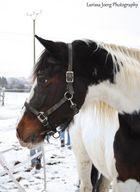 Das Glück der Pferde, ist der Reiter auf der Erde