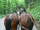 ..das Glück dieser Erde liegt auf der Bank hinter'm Pferde...