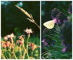 Das Glück ist wie ein Schmetterling.