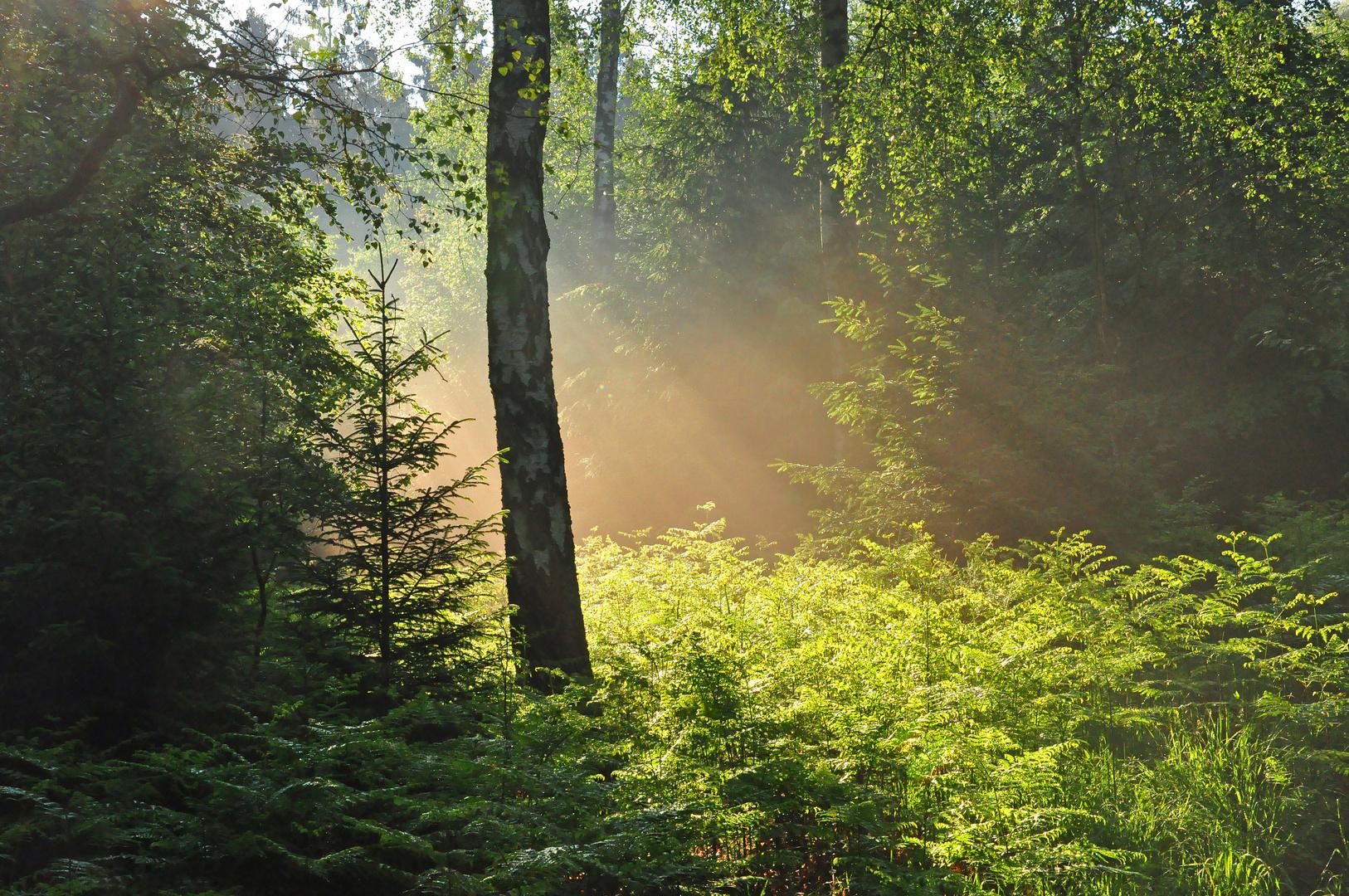 Das Göttliche Licht Teil 2