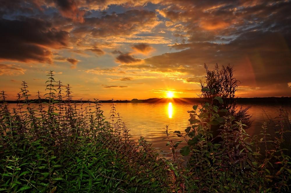 """Das """"Gold"""" vom Rangsdorfer See....."""