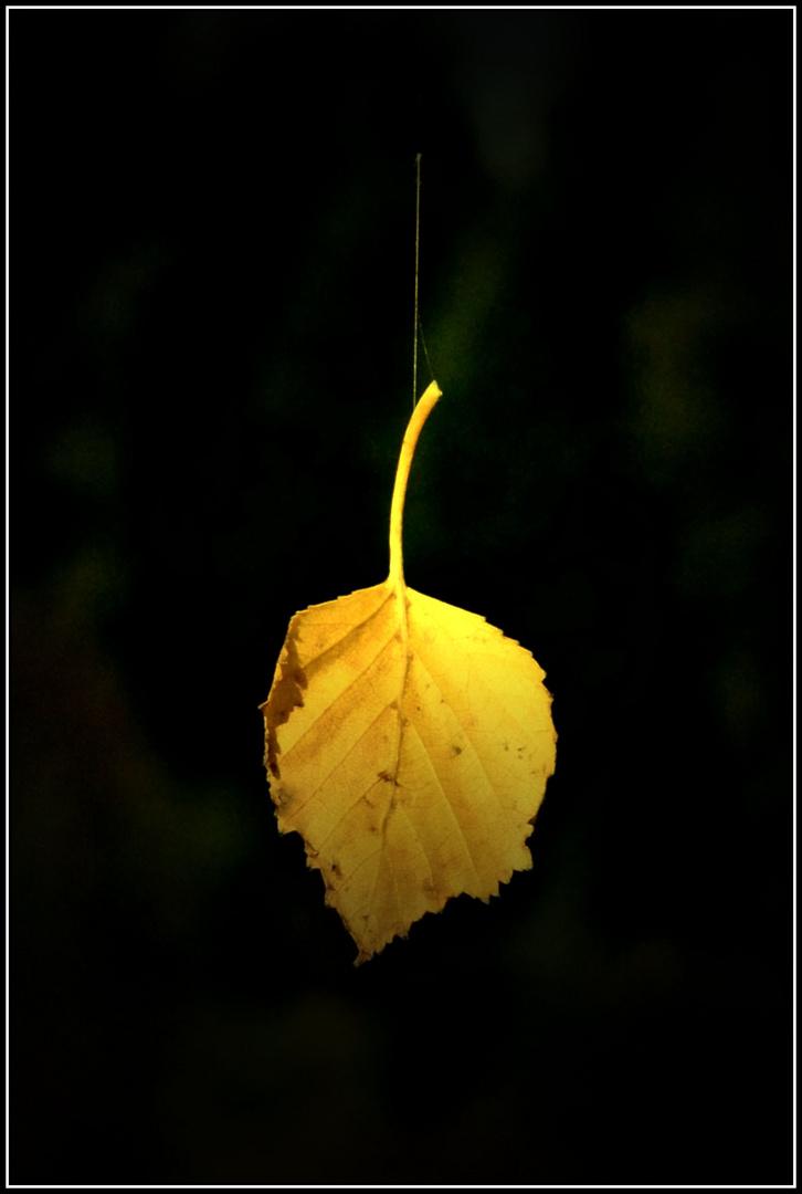 Das goldene Blatt am seidenen Faden