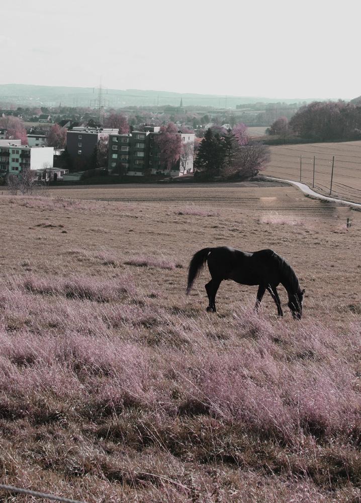 Das grasende Pferd