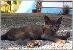 das graue Kätzchen von Samos...