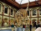 Das größte aufgestellte Dinosaurierskelett…