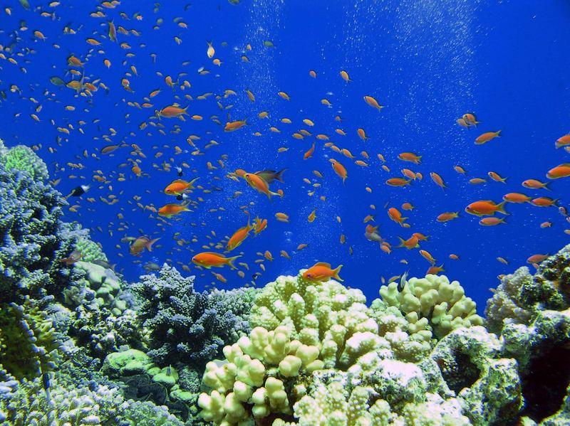 """Das """"große Aquarium"""""""