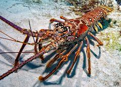 Das große Krabbeln