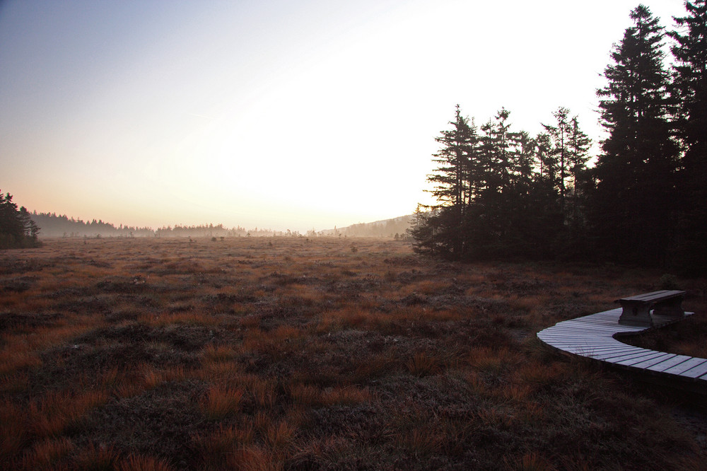 das große Torfmoor -Brunft 2008