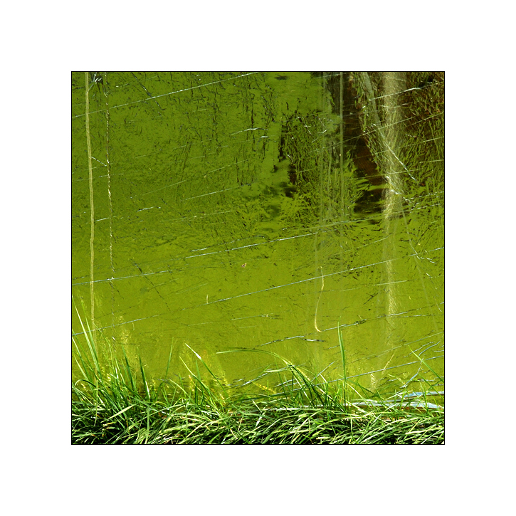 Das Grün