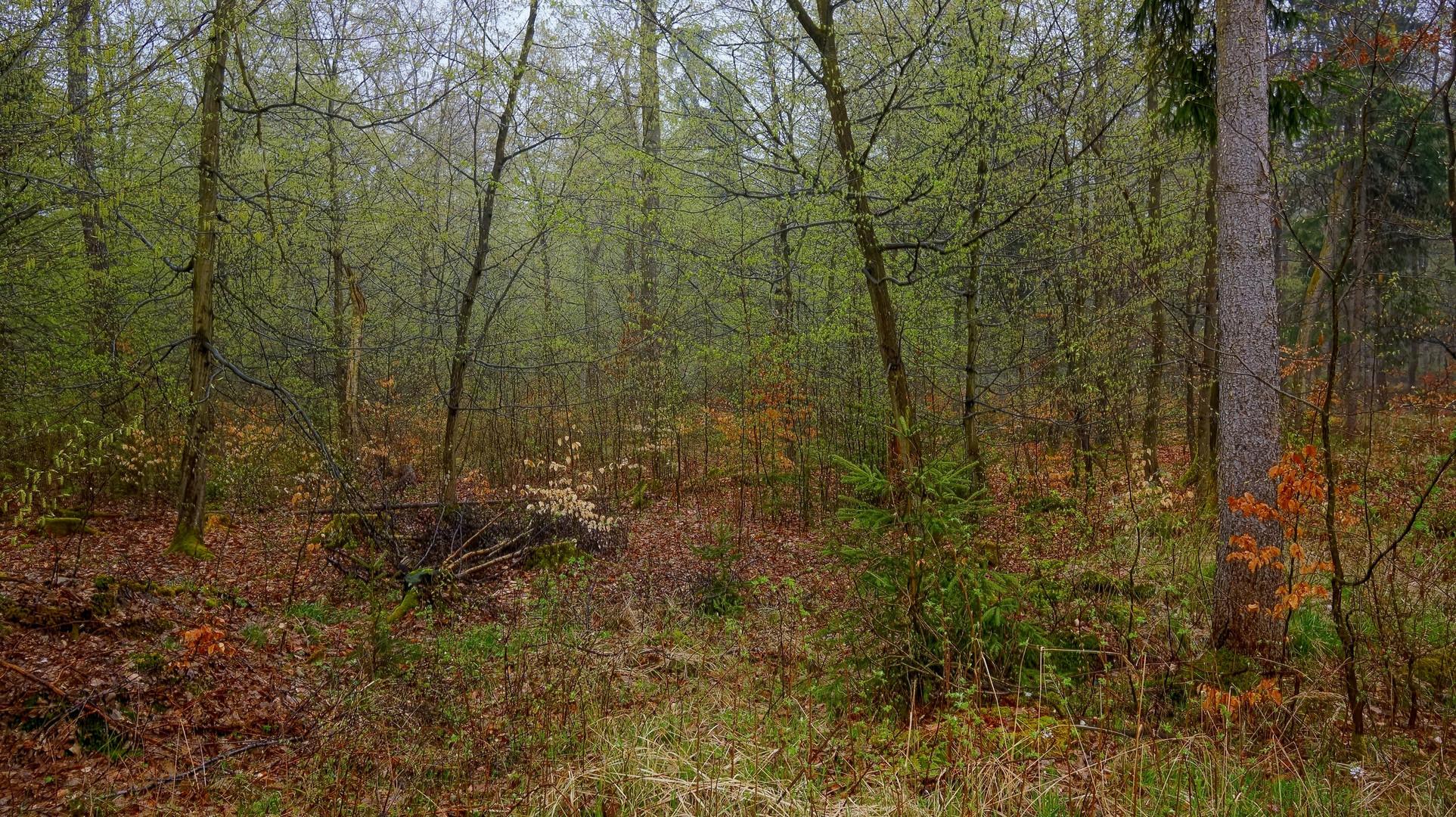 Das Grün des Frühlings III (el verde de la primavera III)