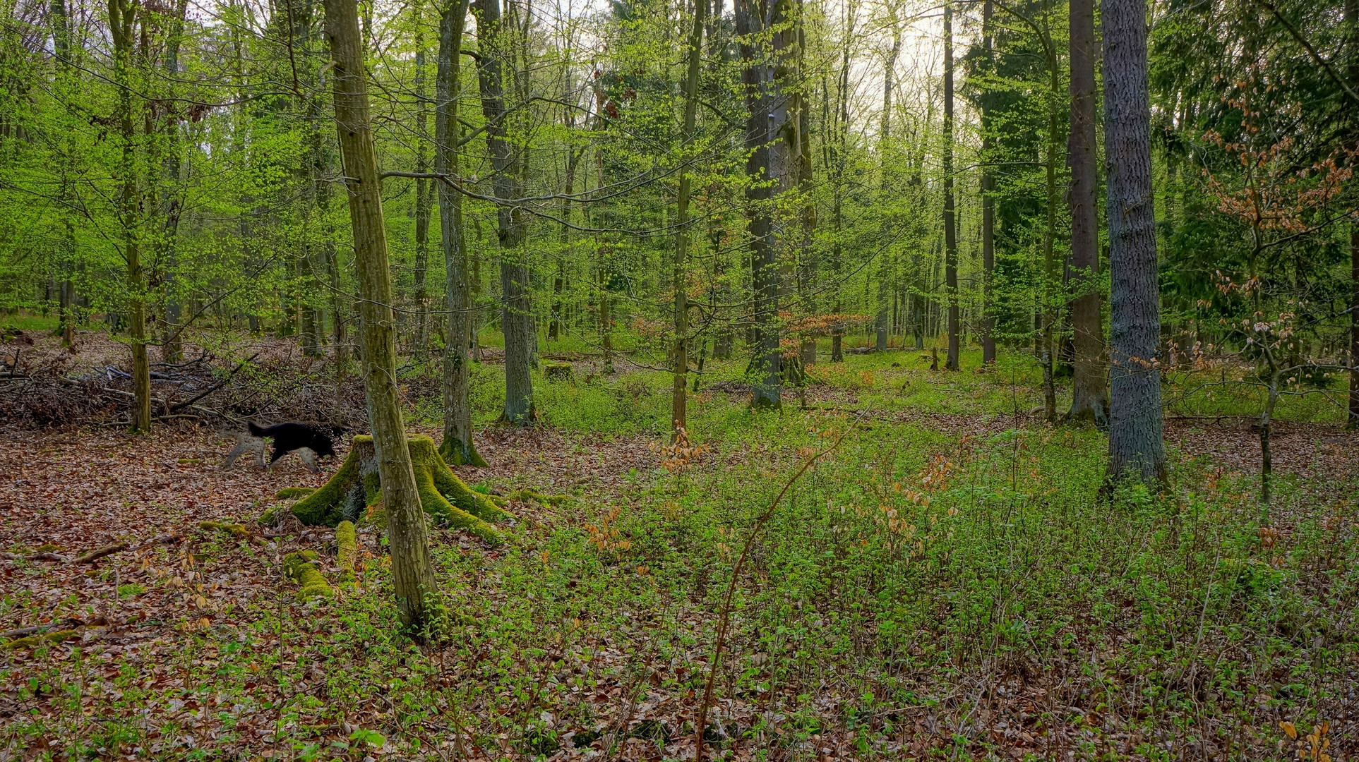 Das Grün des Frühlings VI (el verde de la primavera VI)