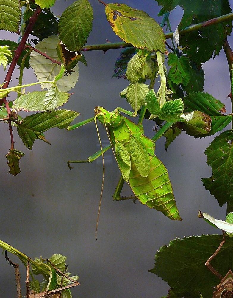Das Grüne Blatt