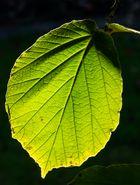 Das grüne Blatt II