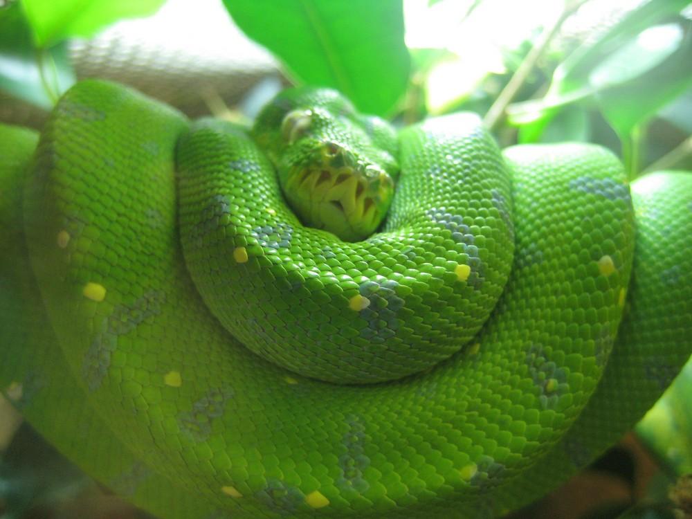 Das grüne gerollte.....