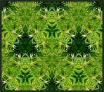 Das grüne Kaleidoskop