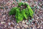Das gute Grüne aus Samt