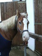 das hält dieses Pferd vom Fotografieren