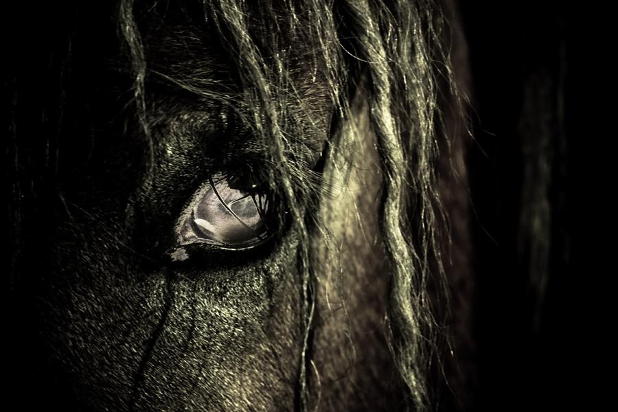 Das Halloween Pferd