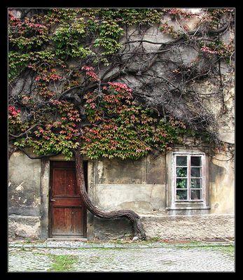das Haus und der Baum