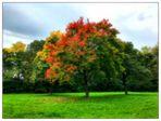 Das Herbstkleid der Natur
