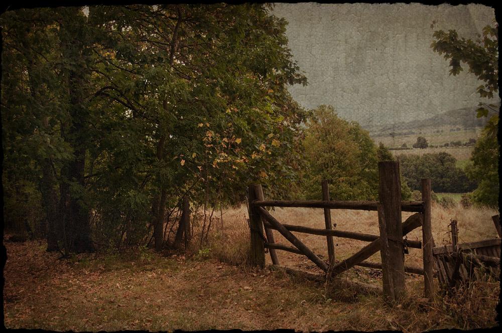 das Herbstlied der Bäume ...