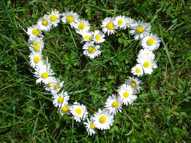 Das Herz der Natur