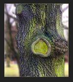 Das Herz eines Baumes