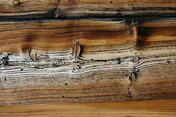 Das Holz, die Alm, die Witterung, die Struktur, das Alter, der Urlaub....???