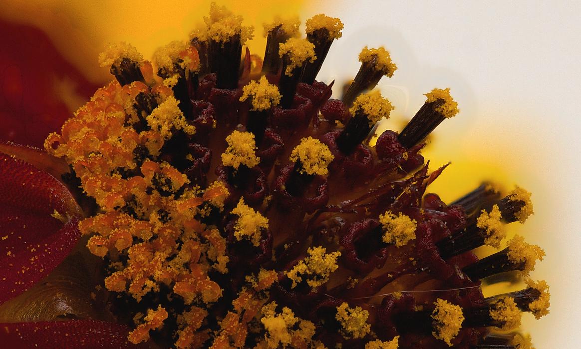 Das Innere der Blüte