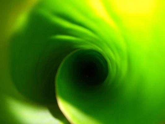 Das Innere einer Bananenstaude......