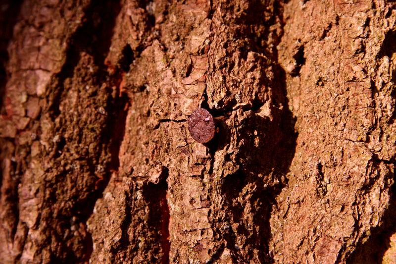 Das Insekt auf dem Nagel :-)