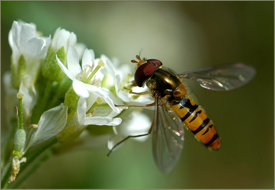 Das Insekt des Jahres 2004...