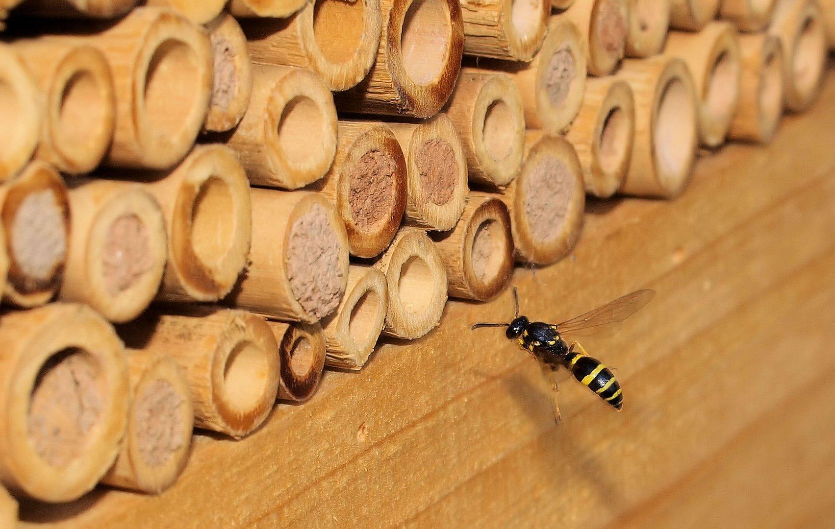 das insektenhotel f llt sich weiter foto bild tiere. Black Bedroom Furniture Sets. Home Design Ideas