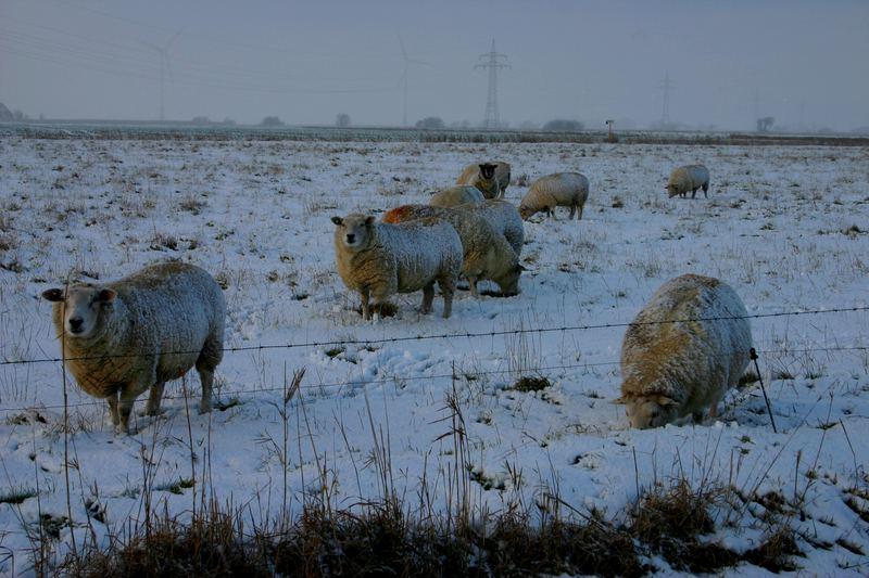 Das ist bestimmt die Schafskälte