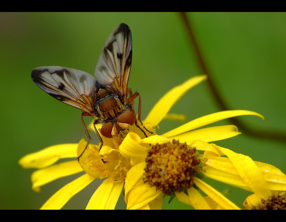 Das ist doch mal ne schöne Fliege...
