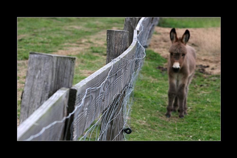 Das ist eine Diagonale, Du Esel