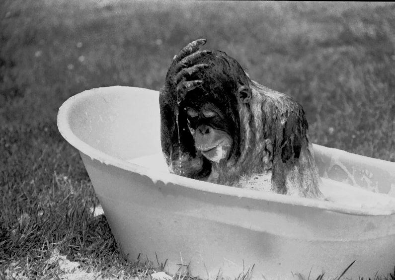 das ist es : eine kalte Dusche